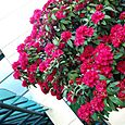 Flowers_outside_the_convention_center